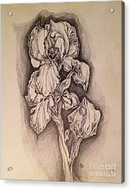 Acrylic Print featuring the drawing Iris by Iya Carson