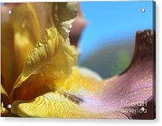 Iris Landscape Acrylic Print