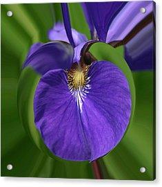 Iris Leaf Acrylic Print
