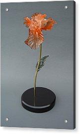 Iris Acrylic Print by Leslie Dycke