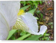 Iris Macro 2 Acrylic Print