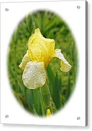 Iris Madi Moonlight Acrylic Print