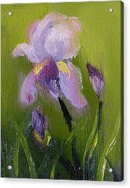 Iris Miniature Acrylic Print by Carol Berning