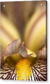 Iris Mouth Acrylic Print by Joy Watson