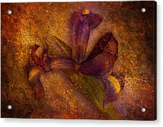 Acrylic Print featuring the photograph Iris Number Eight by Bob Coates