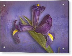 Acrylic Print featuring the photograph Iris Number Five by Bob Coates