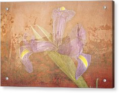 Acrylic Print featuring the photograph Iris Number Four by Bob Coates