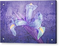 Acrylic Print featuring the photograph Iris Number Seven by Bob Coates