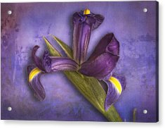 Acrylic Print featuring the photograph Iris Number Six by Bob Coates