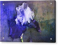 Acrylic Print featuring the photograph Iris Number Three by Bob Coates