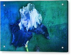 Acrylic Print featuring the photograph Iris Number Two by Bob Coates