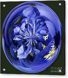 Iris Orb Acrylic Print by Anne Gilbert