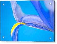 Iris Profile Acrylic Print