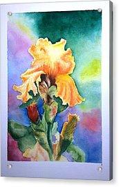 Iris Sold Acrylic Print by Richard Benson