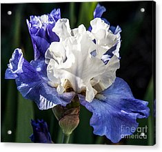 Acrylic Print featuring the photograph Stairway To Heaven Iris by Roselynne Broussard