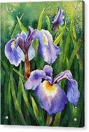 Iris Setosa Alaska Acrylic Print