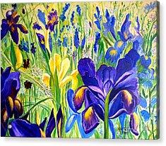 Iris Spring Acrylic Print by Julie Brugh Riffey