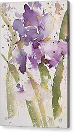 Iris Study #3 Acrylic Print by Robin Miller-Bookhout