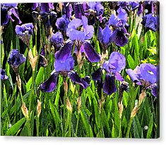 Iris Tectorum Acrylic Print by Yue Wang