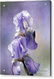 Acrylic Print featuring the photograph Iris Twins by Vicki DeVico