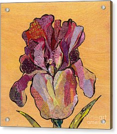 Iris V  - Series V Acrylic Print by Shadia Derbyshire
