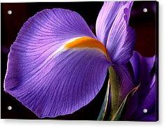 Iris V Acrylic Print