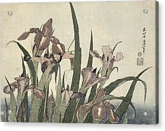 Irises And Grasshopper Acrylic Print