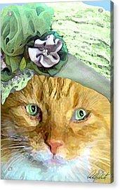 Irish Cat Acrylic Print by Michele Avanti