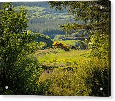 Irish Countryside In Spring Acrylic Print