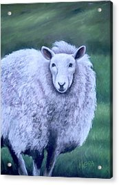 Acrylic Print featuring the painting Irish Sheep Portrait by Melinda Saminski