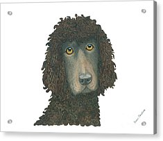 Irish Water Spaniel Acrylic Print