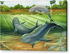 Irrawaddy Or Mekong River Dolphin Acrylic Print by Tammy Yee
