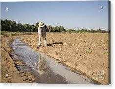 Irrigation In Arizona Desert Acrylic Print by Jim West