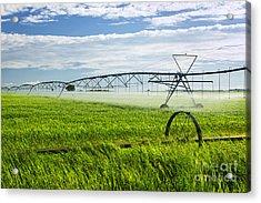 Irrigation On Saskatchewan Farm Acrylic Print by Elena Elisseeva