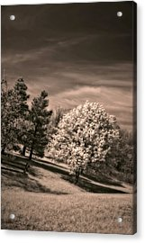 ...is But A Dream Acrylic Print by Steve Harrington