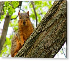 Is It Alright To Have Some Acorns ? Acrylic Print by Tina M Wenger