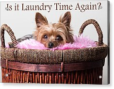 Is It Laundry Time Again? Acrylic Print by Purple Moon