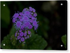 Acrylic Print featuring the photograph Is That Purple by Greg Graham