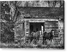 Is This Our Barn Acrylic Print by Betty LaRue