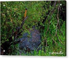 Isabel Creek Acrylic Print