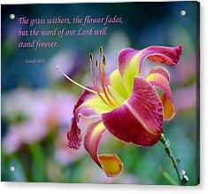 Isaiah 40-8 Acrylic Print