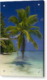 Island Dream Acrylic Print