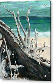 Island Driftwood Acrylic Print by Dennis Orlando