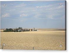 Island In Wheat Field Acrylic Print