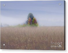Acrylic Print featuring the photograph Island Of Color In Sea Of Fog by Dan Friend
