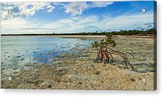 Isolated Acrylic Print by Chad Dutson