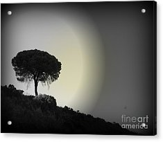 Isolation Tree Acrylic Print by Clare Bevan