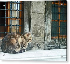 Istanbul Cat Acrylic Print