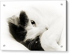 It Is Hard To Be So Cute Acrylic Print