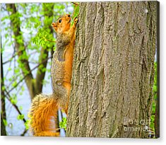 It Is Hard Work Getting To The Top Acrylic Print by Tina M Wenger